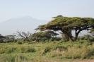 2013 по Кении